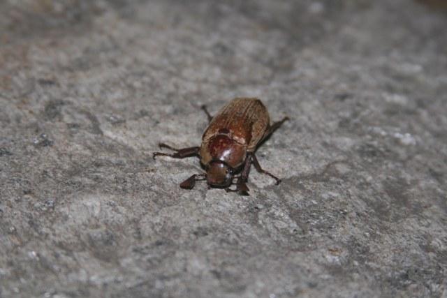 Mushiweb