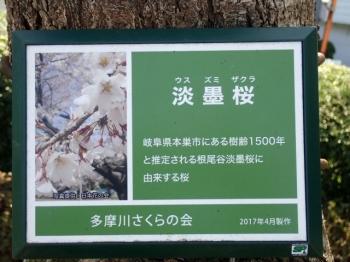210314sakura03web